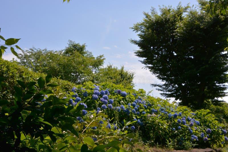 Lasowy kąpanie, świeży zieleń park/ obrazy stock