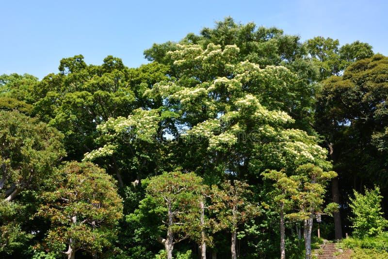 Lasowy kąpanie, świeży zieleń park/ zdjęcie stock