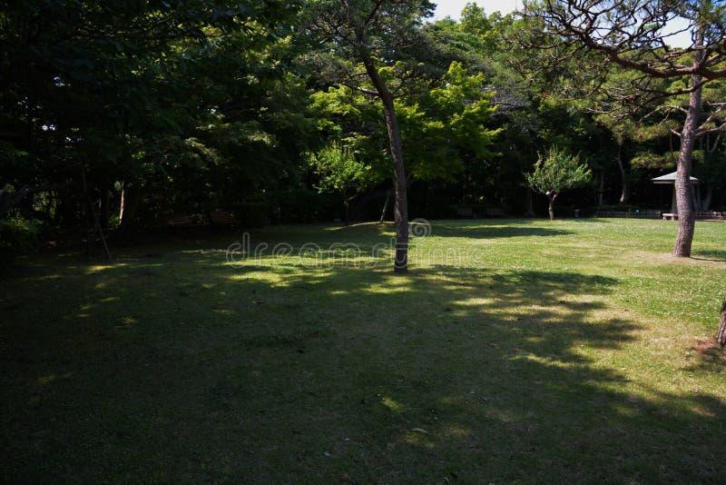 Lasowy kąpanie, świeży zieleń park/ zdjęcia stock