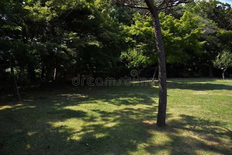 Lasowy kąpanie, świeży zieleń park/ obraz stock