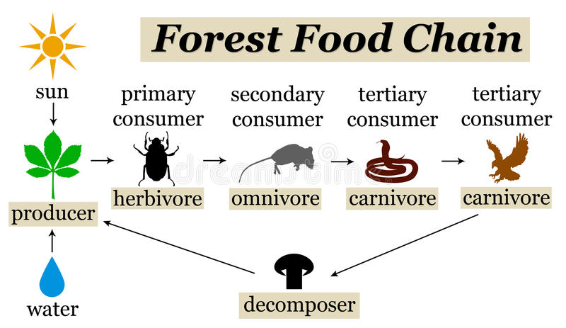 Lasowy karmowy łańcuch ilustracji