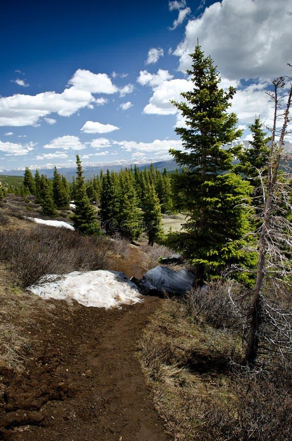 lasowy krajowy rzeczny biel fotografia stock