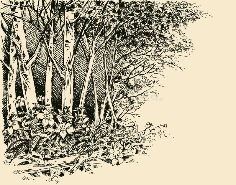 Lasowy krawędź rysunek ilustracji