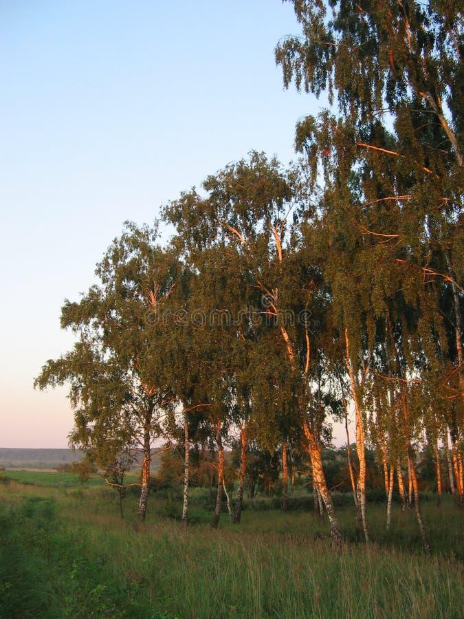 Download Lasowy lato obraz stock. Obraz złożonej z zmierzch, błękitny - 13332395