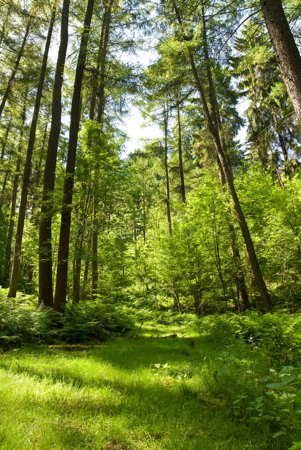 lasowy lato obraz royalty free