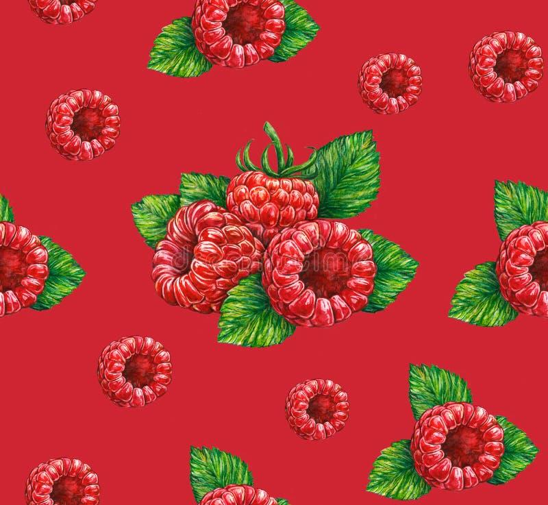 _lasowy malinka odizolowywać na czerwień tło banki target2394_1_ kwiatonośnego rzecznego drzew akwareli cewienie handwork Bezszwo royalty ilustracja