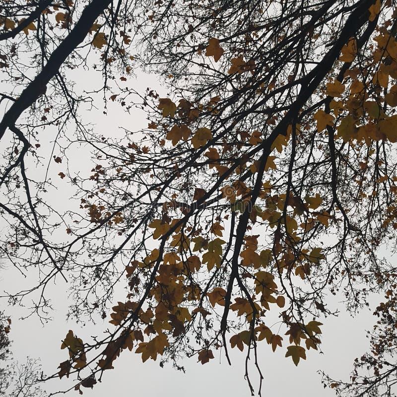 lasowy natury droga przemian drzewo fotografia royalty free