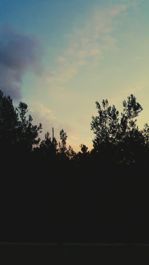 Lasowy niebo zdjęcia stock