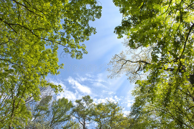 lasowy niebo obraz royalty free