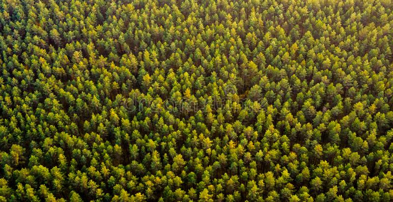Lasowy odgórny widok