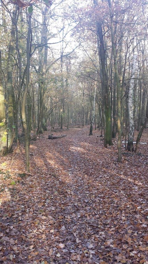 lasowy Październik obrazy royalty free