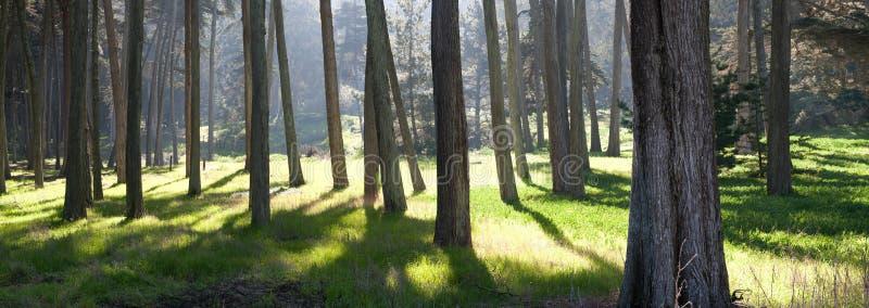 lasowy panoramiczny widok zdjęcie stock