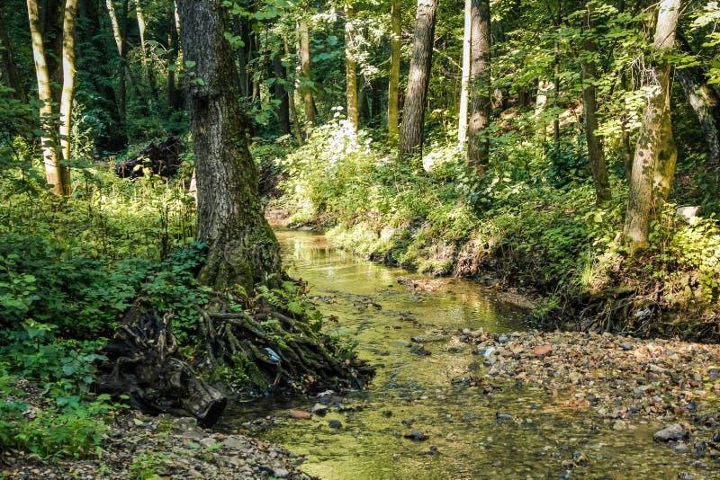 Lasowy piękny strumień Repinka, Rosja zdjęcie royalty free