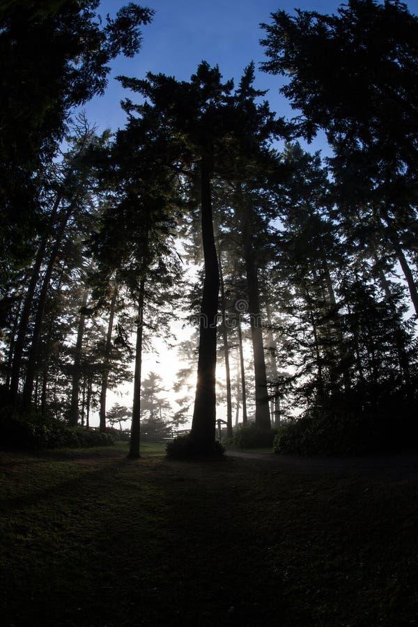 Lasowy Pobliski wybrzeże Olimpijski półwysep zdjęcie stock