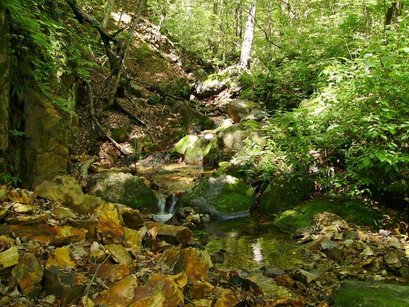 Lasowy rohlada w upale obraz stock