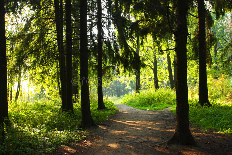 lasowy słońce zdjęcia royalty free