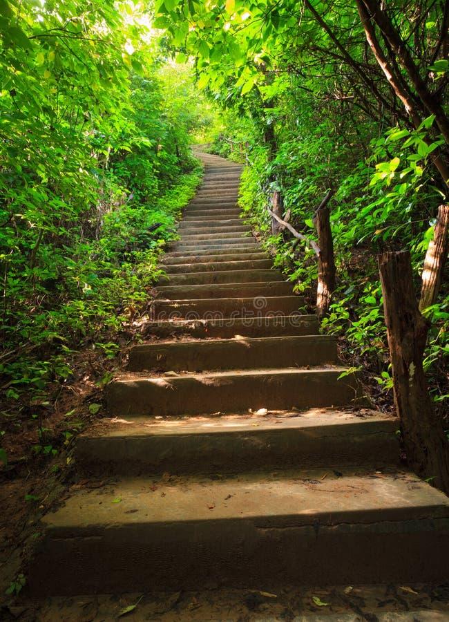 lasowy schody obraz royalty free