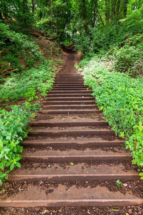 Lasowy schody zdjęcie stock