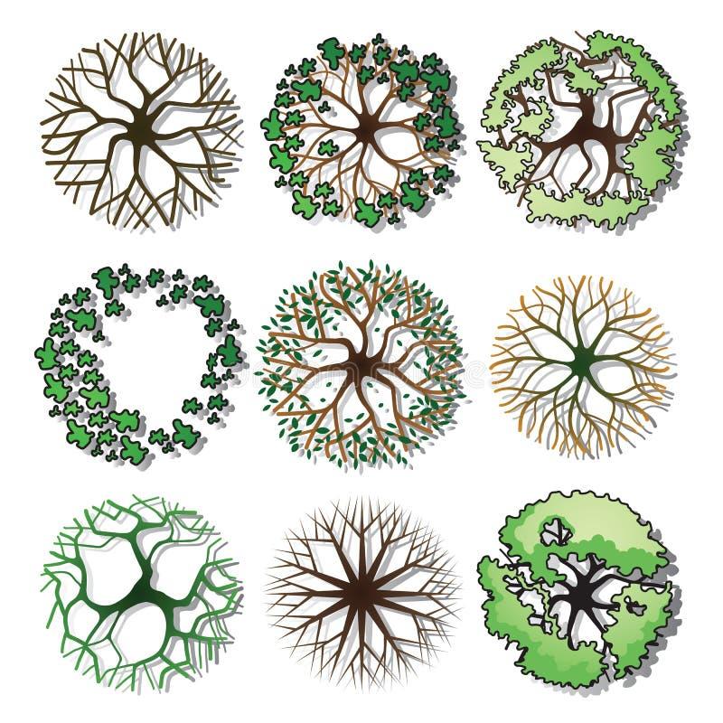 lasowy sosny wierzchołka drzewo ilustracja wektor