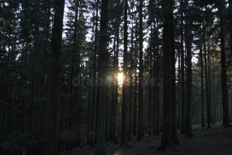 lasowy spacer obrazy royalty free