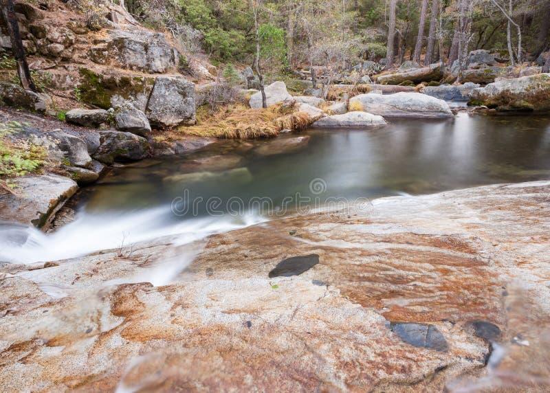 Lasowy strumień Chwytający z Długim ujawnieniem zdjęcia royalty free