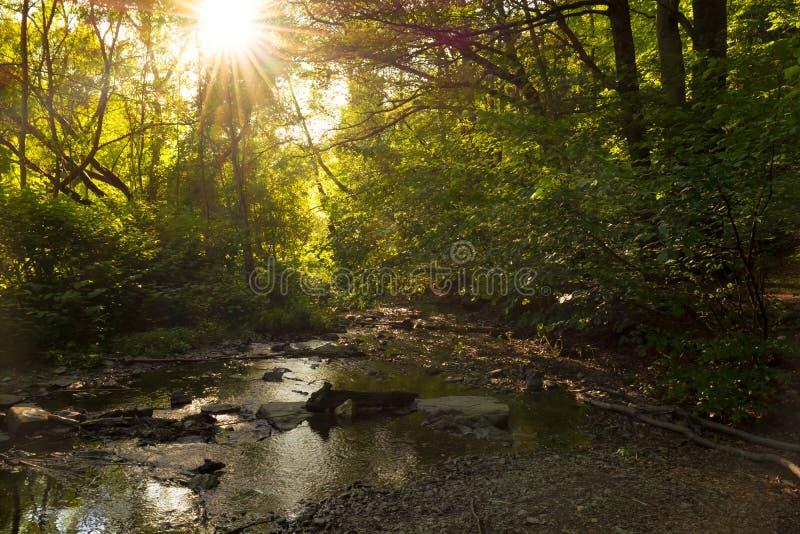 Lasowy strumień z światłem słonecznym obraz royalty free