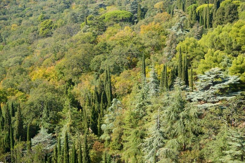 Lasowy tło obraz stock