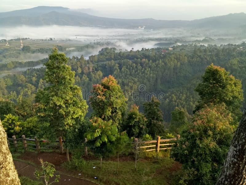 Lasowy tebin keraton zdjęcia stock