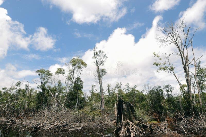 Lasowy teren fotografia stock