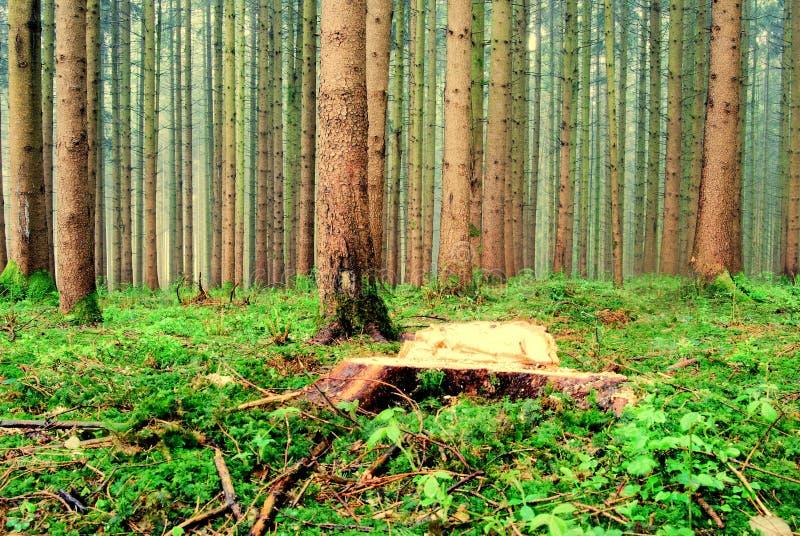 Download Lasowy widok obraz stock. Obraz złożonej z szczegółowy - 13331507