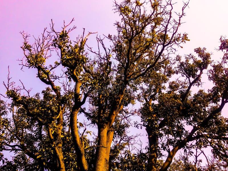 Lasowy widok zdjęcie stock