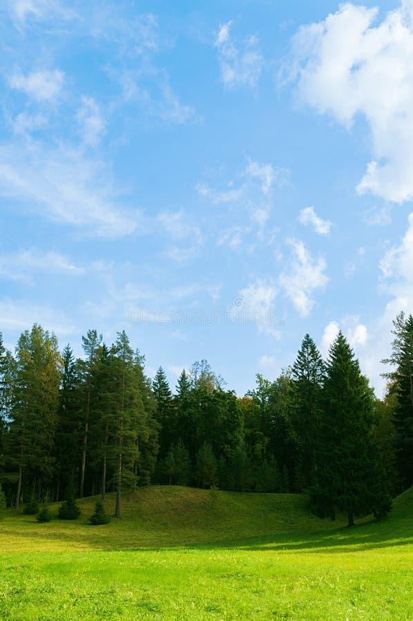 Lasowy wiosna krajobraz - lasowi drzewa w dolinie w pogodnej wio?nie wietrzej? obrazy stock