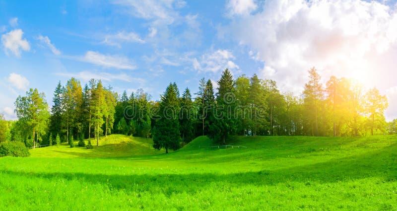 Lasowy wiosna krajobraz - zwarci lasowi drzewa w dolinie w pogodnej pogodzie, panoramiczny widok zdjęcia royalty free