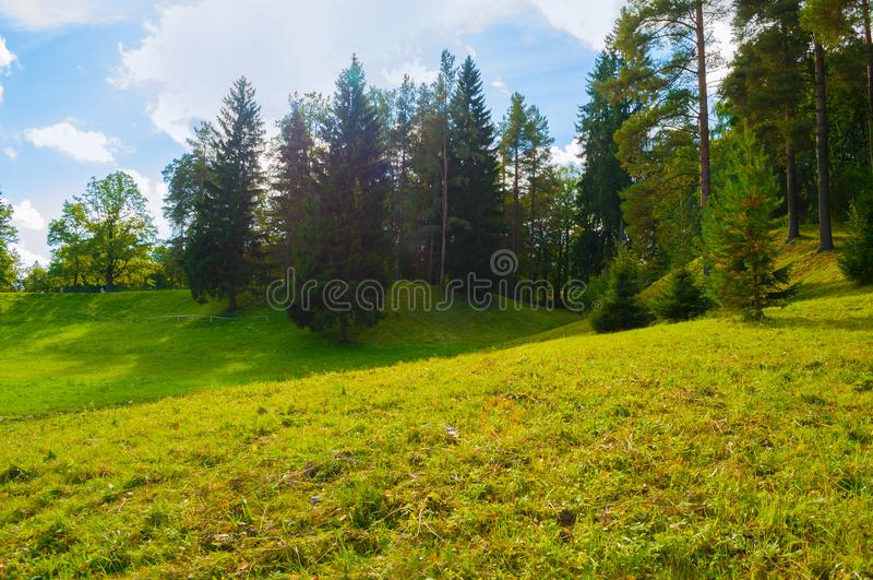 Lasowy wiosna krajobraz - zwarci lasowi drzewa w pogodnej dolinie fotografia stock