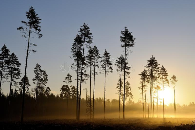 Lasowy wschód słońca zdjęcie stock