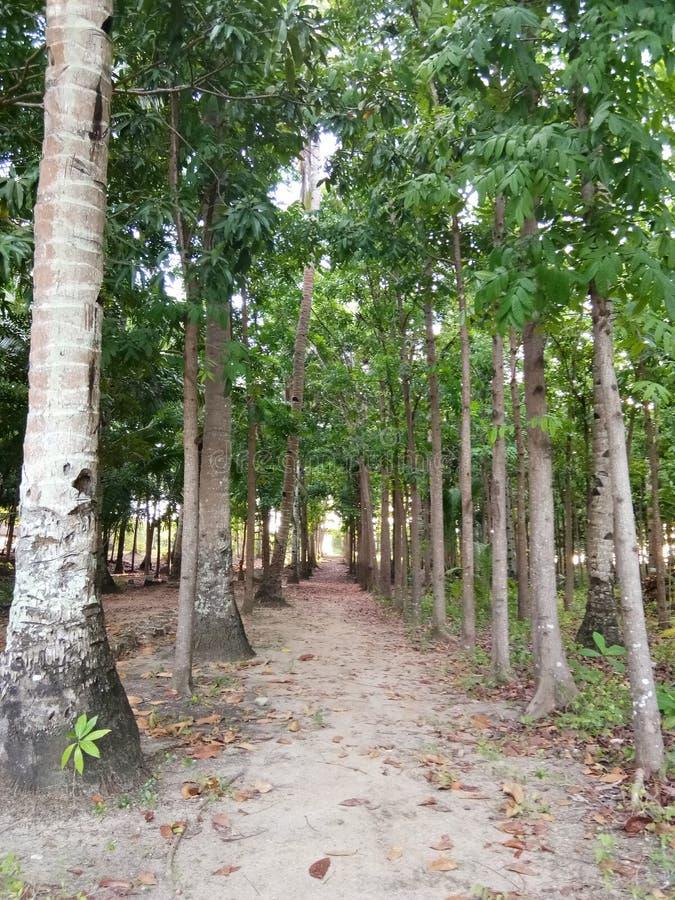 lasowych dżungli drzew budy podróży spaceru nieba drogowy linia horyzontu obraz royalty free