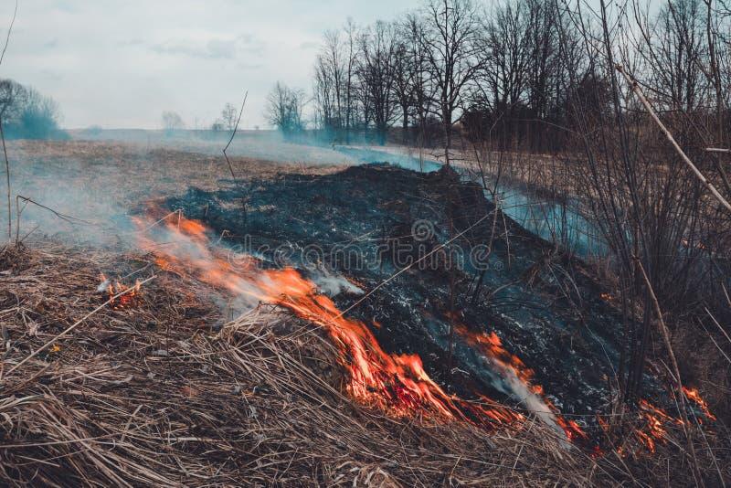 Lassen Sie uns sagen trockenes, Gras, es zu brennen aufzuhören ist gefährlich stockbild