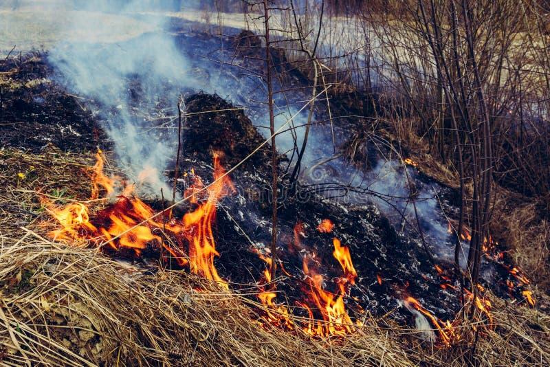Lassen Sie uns sagen trockenes, Gras, es zu brennen aufzuh?ren ist gef?hrlich lizenzfreie stockfotografie