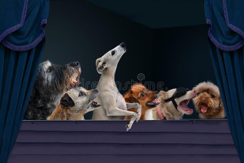 Lassen Sie uns zusammen singen, Hunde im Theater lizenzfreie stockfotografie