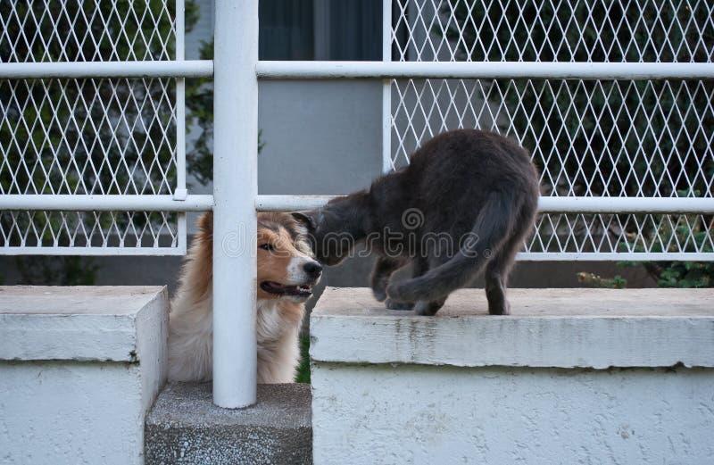 Lassie και γκρίζα γάτα στοκ εικόνες
