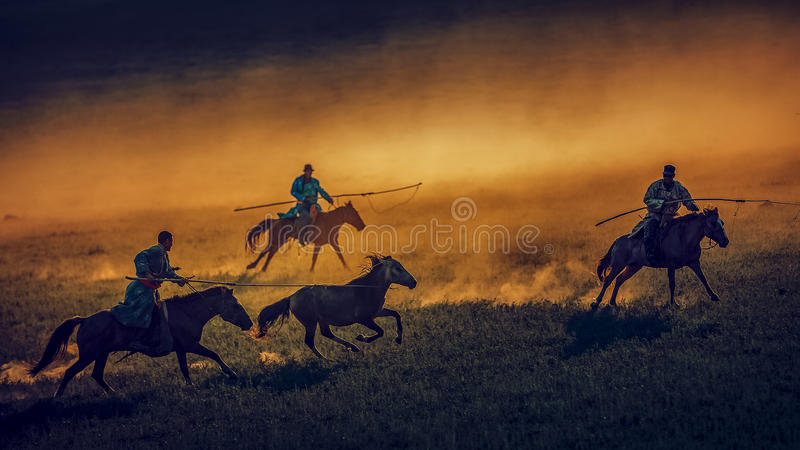 lasso a horse royalty free stock photos