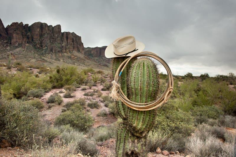 Lasso sur le cactus photo libre de droits