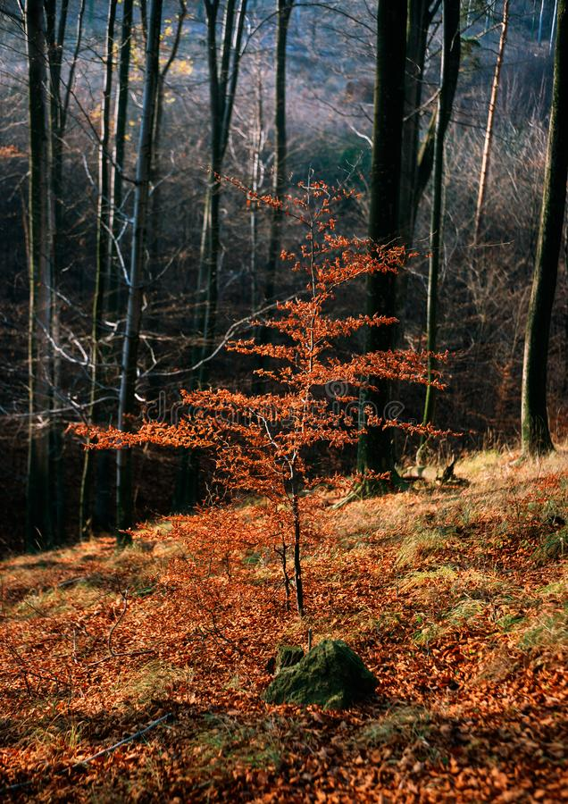 Last autumn games royalty free stock photography