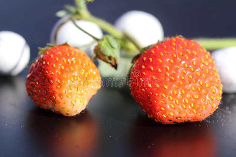 Last berries of strawberry stock images