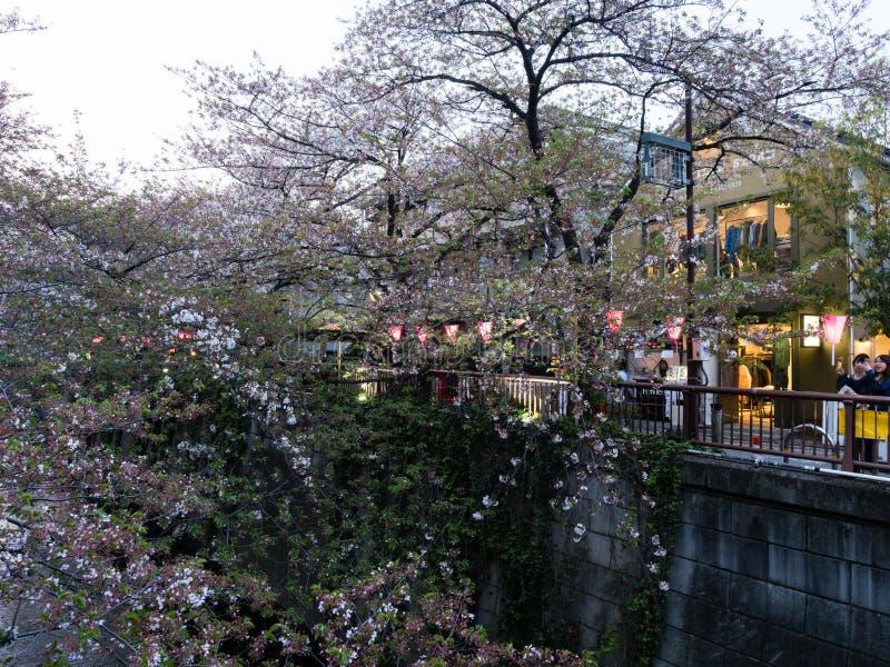 Last cherry blossoms of the season on Meguro river, a popular sakura viewing spot in Tokyo. Tokyo, Japan - April 2, 2018: Last cherry blossoms of the season on stock image