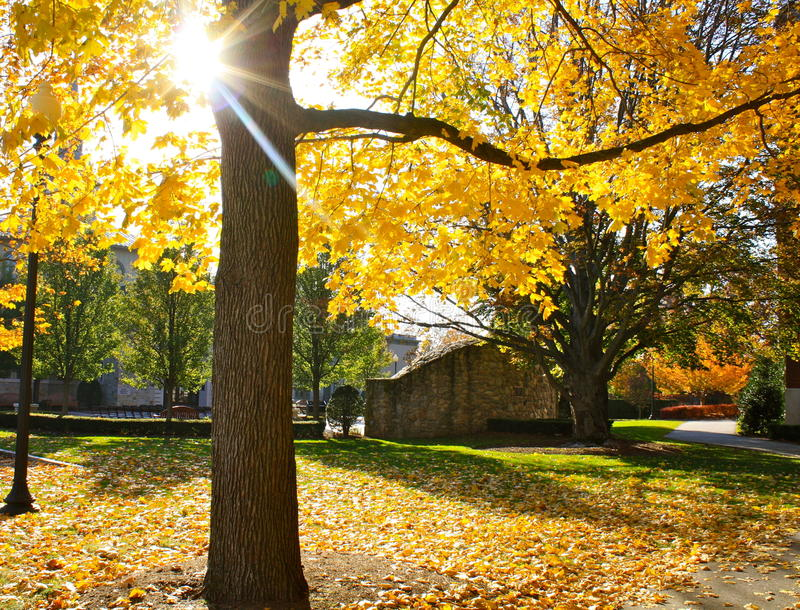 Last days. The last days before the leaves get stripped off of this majestic tree. The sun is coming through, warming up the path royalty free stock photo
