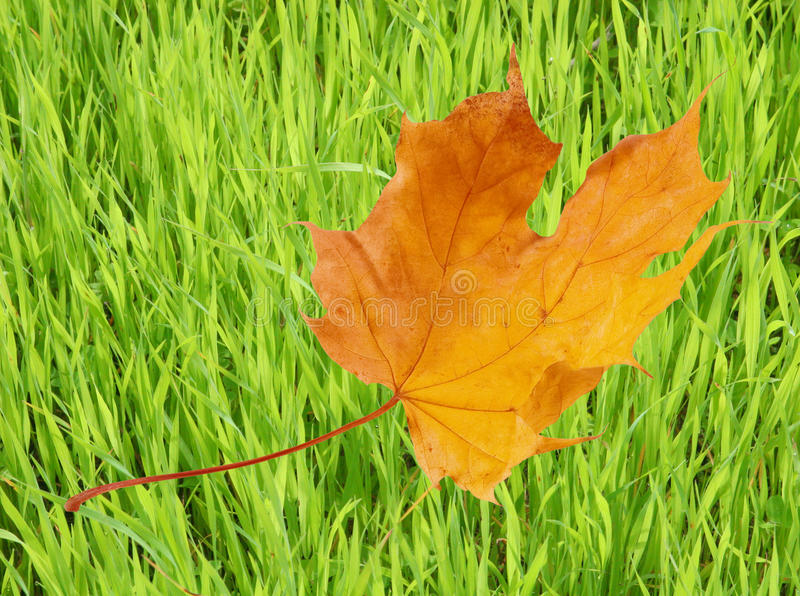 Download Last Days of Summer stock photo. Image of nature, maple - 10772238