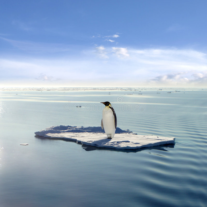 The last emperor. An emperor penguin floating on an ice floe. This is an conceptual image displaying the threat of global warming. The emperor penguin found a