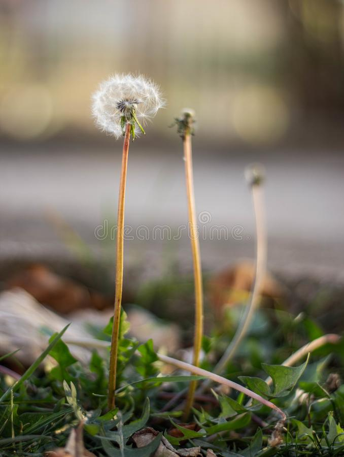 The last flower. A flower in the beating of wind almost waxed in anticipation of autumn days royalty free stock images
