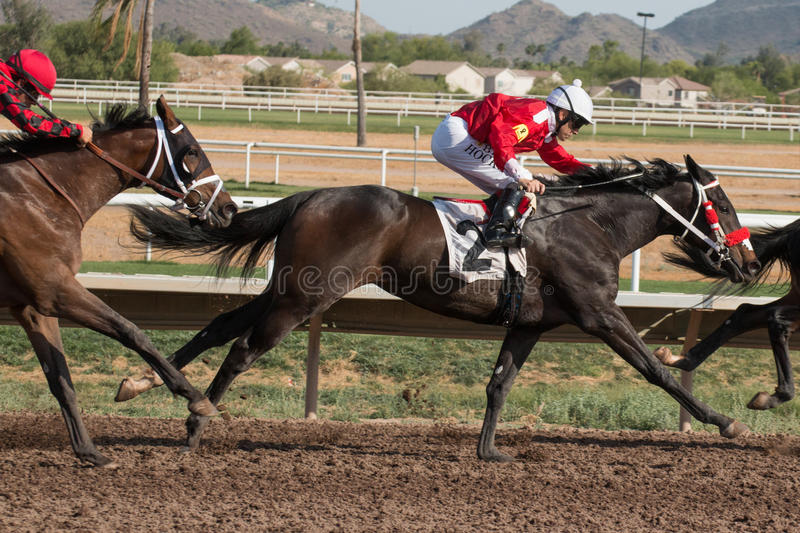 Last Horse Races In Arizona Until Fall. Turf Paradise celebrated its 61st year of operation. Last day of horse racing until fall at Turf Paradise horse racing stock photos